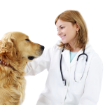 Doctor with dog
